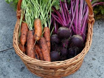 Когда и как копать морковь и свёклу?