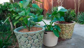 Простые и красивые кашпо для сада