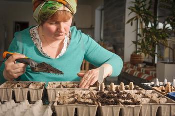 5 ошибок при выращивании рассады, которые приводят к ее перерастанию