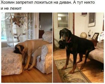 Немного о логике собак, которым что-то запретили