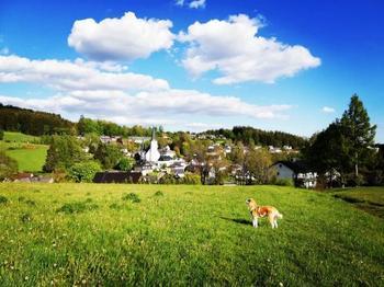 Аиюки, очаровательная собака породы акита-ину, которая обожает пешие прогулки вместе со своим хозяином