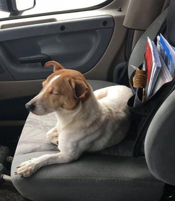 Собака отказалась идти за человеком без своего друга