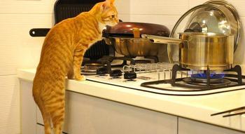 30 способов использования котов в хозяйстве
