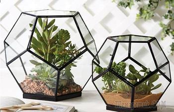 Флорариумы, которые станут неповторимыми украшениями для любого дома