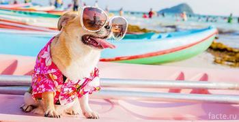 Опасна ли солнечная жара для животных?