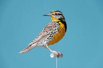 Невероятные птицы из бумаги