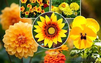Участок в желто-оранжевых тонах: растения, акценты и особенности