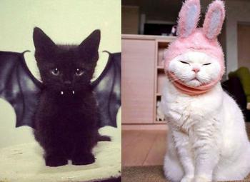 Как в разных странах мира подзывают кошек