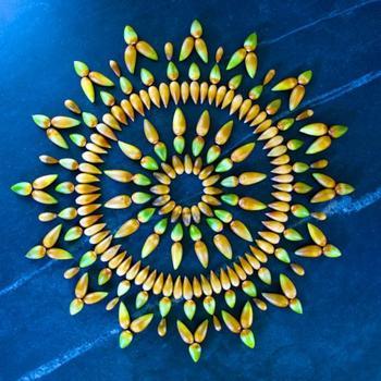 Художница создает красочные мандалы из цветов и растений
