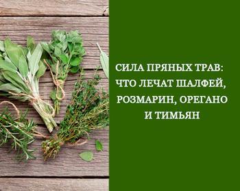 Сила пряных трав: Что лечат шалфей, розмарин, орегано и тимьян