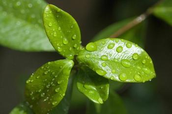 Углекислый газ превращается... в полезный антисептик