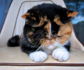 Подборка смешных и забавных кошек