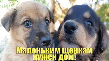 Маленьким щенкам нужен дом!