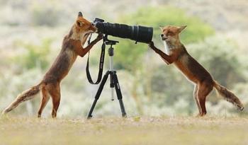 Свежие фото-приколы