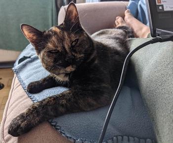 Коты, которые не рады ничему в мире, и демонстрируют это всем своим видом