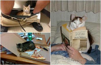 17 наглых котов, которые плевать хотели на личное пространство своих хозяев