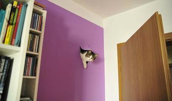 Продлевая жизнь: на этих котов невозможно смотреть без смеха