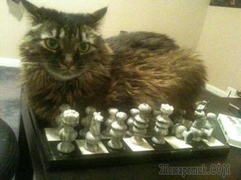 Кошки, выбирающие самые неподходящие места, чтобы прилечь