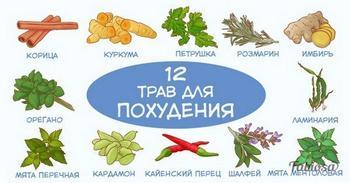 12 трав и специй, которые помогают сбросить лишний вес