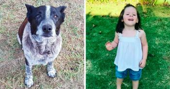В Австралии 17-летняя полуслепая и глухая собака спасла потерявшуюся 3-летнюю девочку