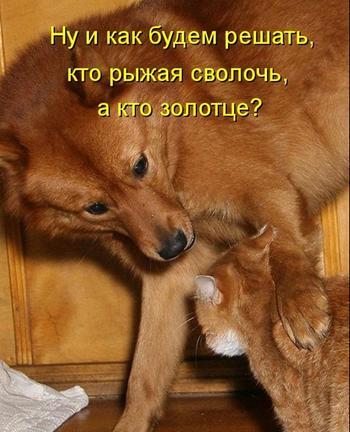 Кошачьи сплетни - 2