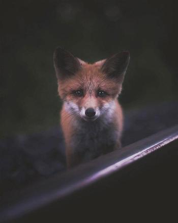 Чувственные и нежные фотографии лесных животных, снятые с близкого расстояния