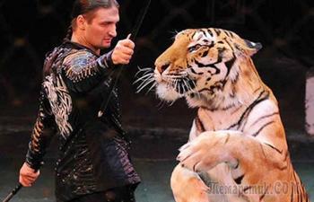 Тайны цирковой династии Запашных: тигры-людоеды, травмы на арене, сломанные судьбы