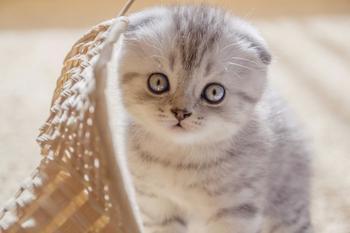 Мимимишная подборка картинок с котятами