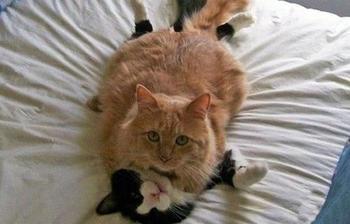 Их застукали на месте преступления (13 котов и их приключения)