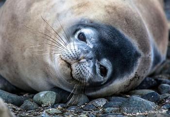 Арктика - Антарктида: Животные на холодном континенте