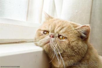 Пушистые ждуны: подборка котиков, ожидающих своих хозяев после работы