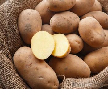 Топ-7 самых крупных сортов картофеля