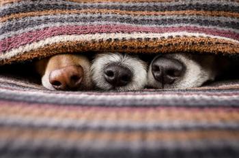 Владельцы собак должны знать эти лайфхаки