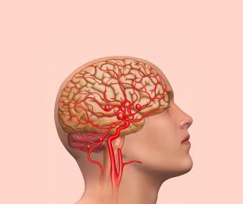 Как поддержать здоровье мозга при помощи питания