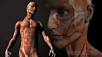 40 невероятных фактов о человеческом теле
