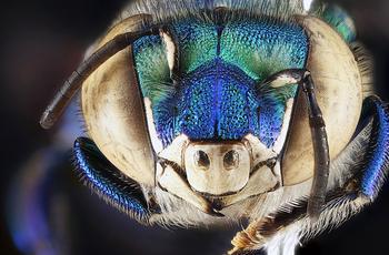 Красивая коллекция насекомых