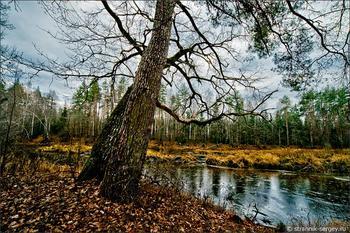 Деревья в лесу поздней осенью