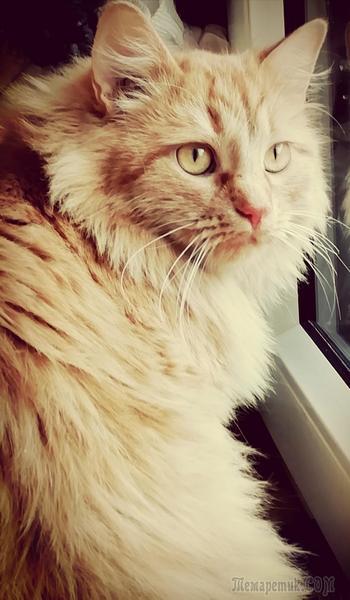 Кошачье-карантинное (Стих)