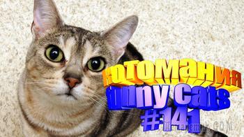 Смешные коты | Приколы с котами | Видео про котов | Котомания # 141