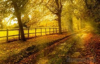 Моя осень...