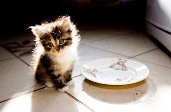 25 самых прелестных фото с котятами, которые только можно представить