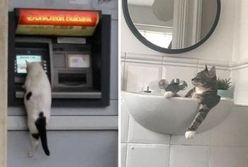 15 случаев, когда коты блеснули сообразительностью