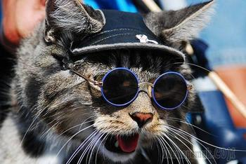 Смешные коты вновь попали в объектив фото камер