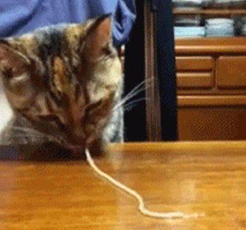 Кошки, которые едят всё подряд