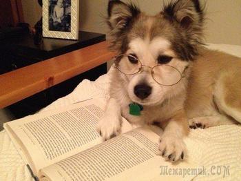 Собаки, которые понятия не имеют, как нужно читать