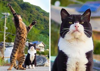 18 пушистых доказательств, что коты делятся на 2 типа