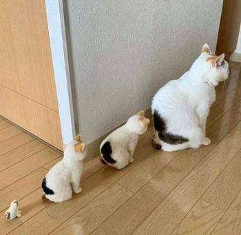 Котейки для хорошего настроения