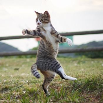 Фотографии кошек — настоящих мастеров боевых искусств