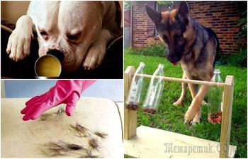 16 хитростей, которые стоит взять на заметку всем владельцам собак