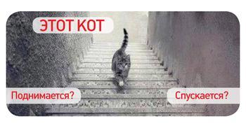 Интернет гадает: этот кот поднимается или спускается по ступенькам?